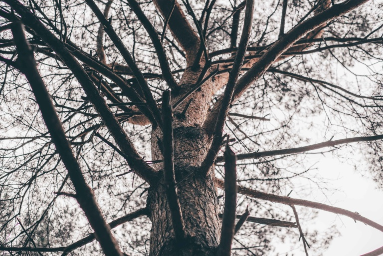 Decision Tree, Expat Wife, Defining your life